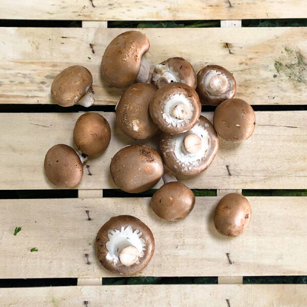 champignon_braun