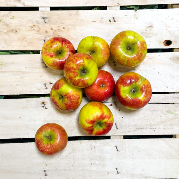 Apfel Bio Topaz