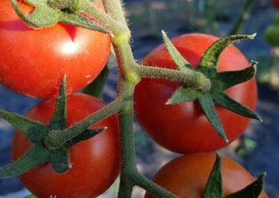 Gartenbau-Riss