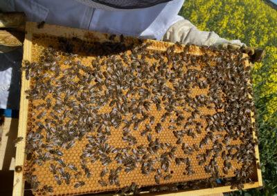 Honig Beefriend